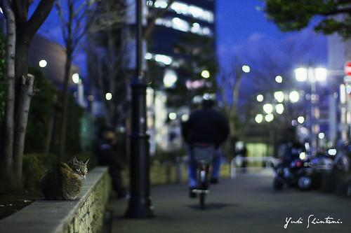 Waits on cold night