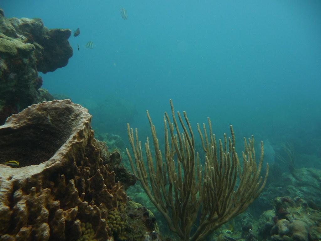 Korallenriff.