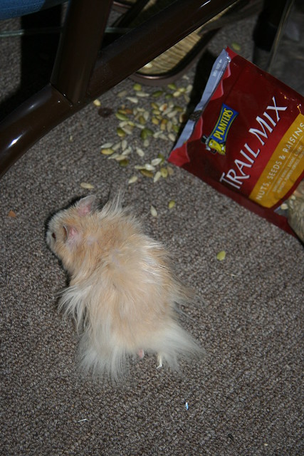 Trail mix bag fell off the table | Flickr - Photo Sharing!