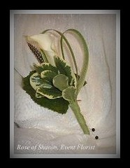 Boutonniere: calla lily iwth pittisporum, lily grass, galex & feather accent