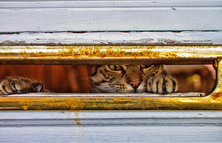 Through the Mail Slot