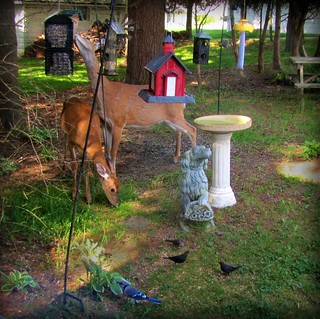 Backyard deer