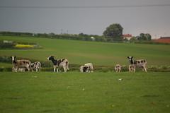 Belchford Walk 2012