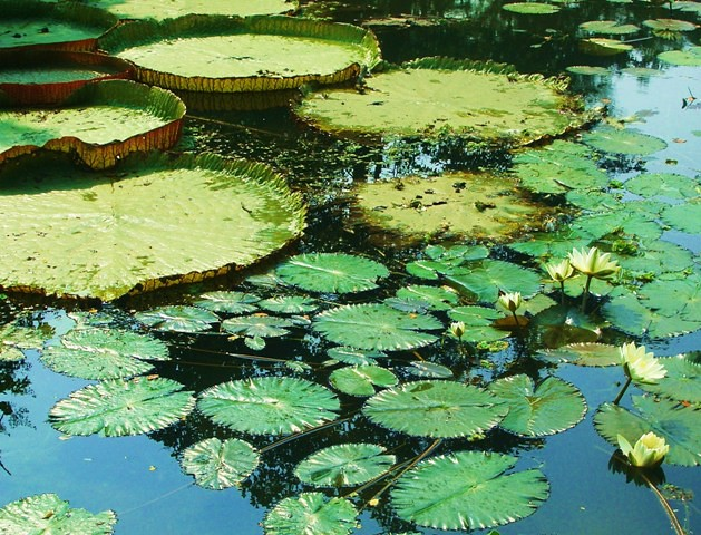 What Is a Pond Ecosystem?
