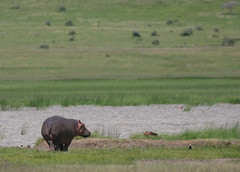 20090507-TZ-NGO_Safari_370