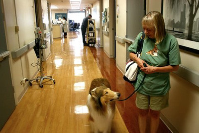 A helping paw: The growing value of therapy dogs