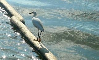 Egret - BP Deepwater Horizon Oil Spill