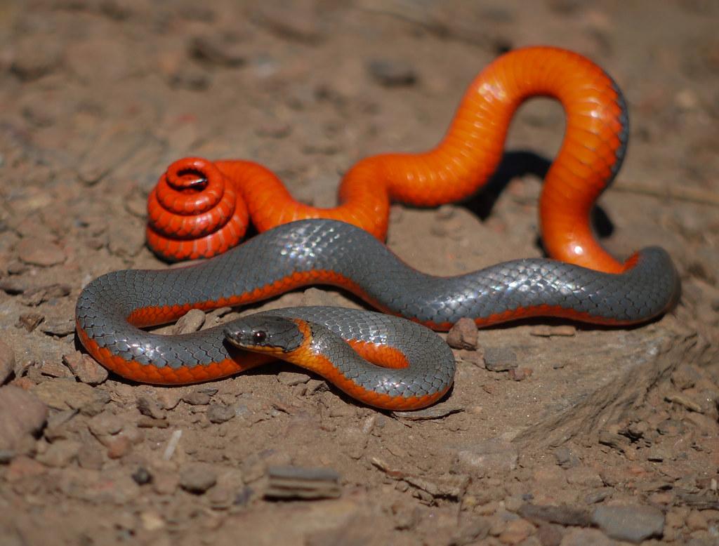 Секс со змеями история фото 38-555