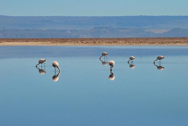 Salar de Atacama. Región de Antofagasta. Chile
