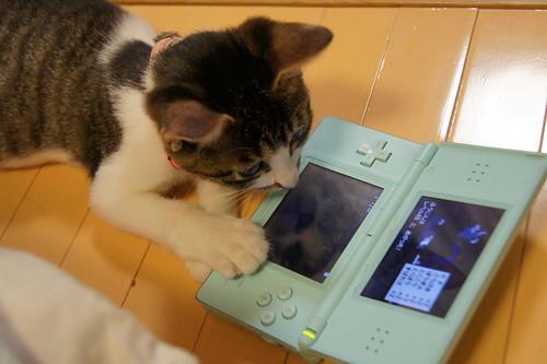 ゲームする猫 by sh1tanaka