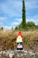 Little dwarf (gnome) lost somewhere in Provence