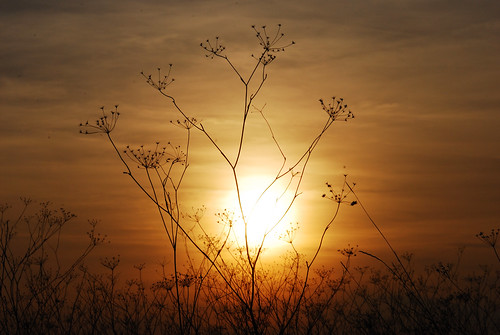 sunset naplemente kistarcsa