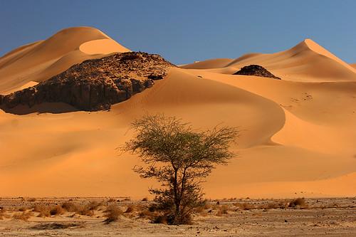 Upside Down Christmas Tree In The Desert