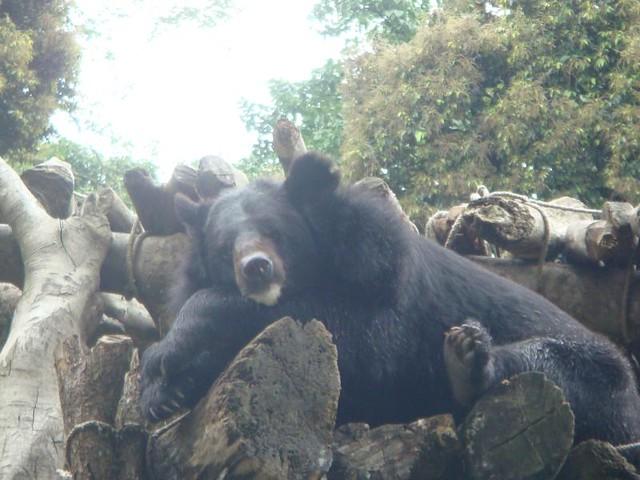 09.Padmaja Naidu Himalayan Zoological Garden (5)