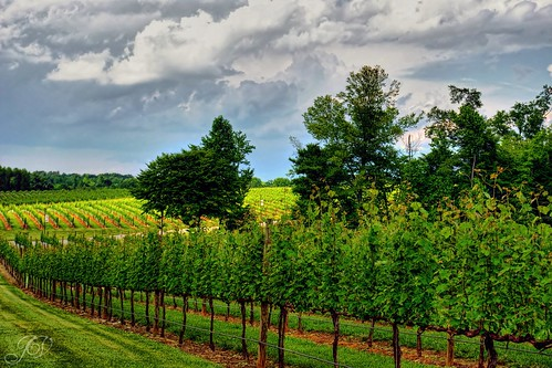 northcarolina childress winery vineyards hdr lexingtonnc jeanetterunyon chldressvineyards