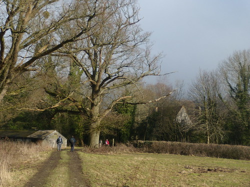 Big trees with Shulbrede Priory