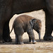 Zoo Jan 2010