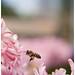 Arı Maya  - Koklama by Harun Yiğit
