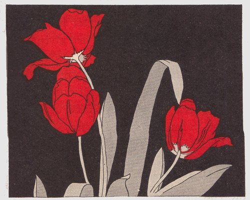 red tulips ill by C. Sprague