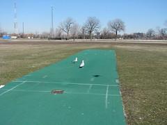 asphalt(0.0), sport venue(0.0), tennis court(0.0), sports(0.0), recreation(0.0), outdoor recreation(0.0), baseball field(0.0), golf club(0.0), golf(0.0), miniature golf(0.0), golf course(0.0), race track(0.0), flooring(0.0), stadium(0.0), grass(1.0), artificial turf(1.0), lawn(1.0),