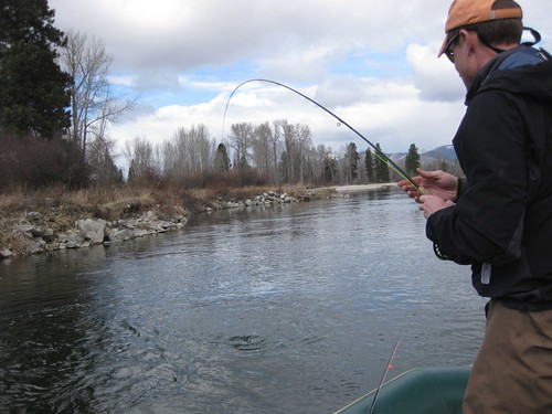 Western montana fly fishing report the caddis fly for Montana fly fishing report