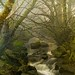 Fog, Cascades and Moss by Anne Strickland