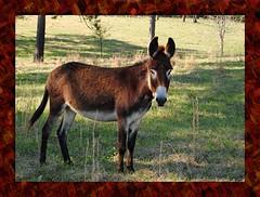 mare(0.0), horse(0.0), grazing(0.0), mustang horse(0.0), animal(1.0), donkey(1.0), pack animal(1.0), fauna(1.0), pasture(1.0), wildlife(1.0),