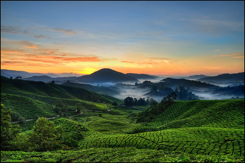 Cameron Highlands Sunrise