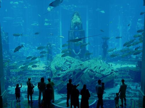 Dubai Atlantis Aquarium A Photo On Flickriver