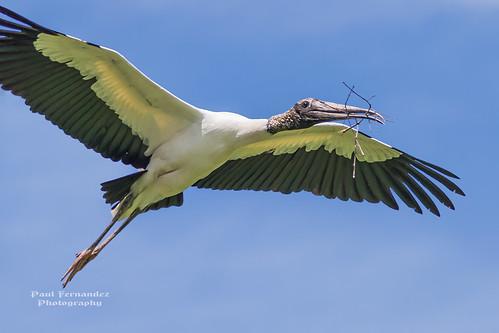 zoo florida jacksonville stork woodstork jacksonvillezoo storkwood