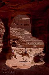 Petra camels...