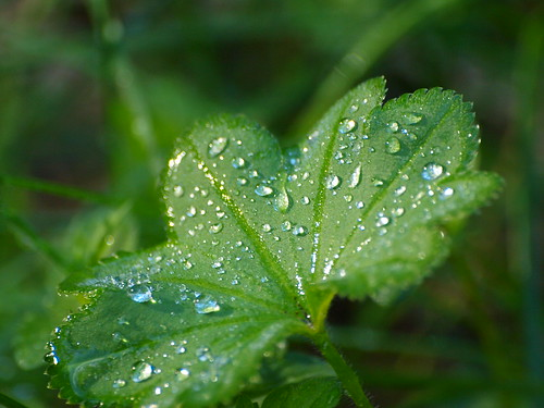 light green water droplets leaf dof sweden bokeh olympus löv droppar grönt vattendroppar e520 zuiko70300mm olympuse520 kinnahult peternyhlén klockedal