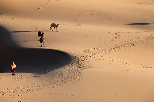 sunrise dawn sand desert dune mongolia camel gobi