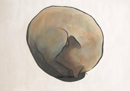 8 x 11 curled siamese cat I
