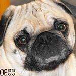 Deeogee
