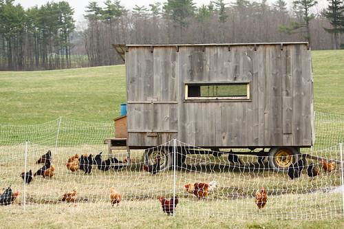 Shelburne Chicken Coop