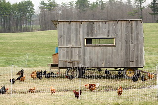 Shelburne Chicken Coop