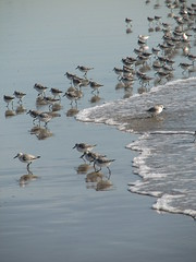 Venice Beach Birds