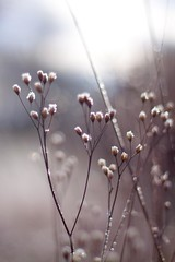 winter macro - Photo of Chauffailles