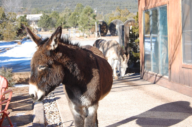 Donkeys at the Hostel!