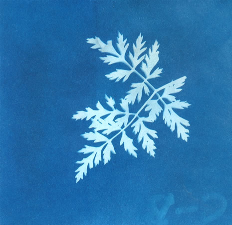 a blue print of a ferm