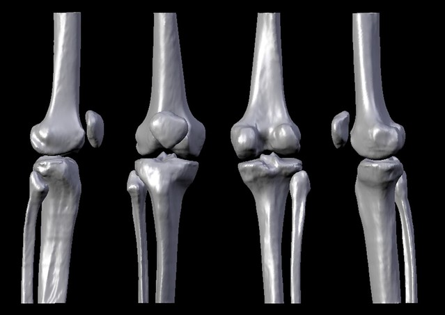 Human knee bones - photo#8