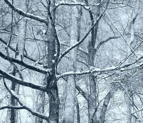 Snow Trees Again