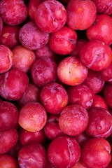 plant(0.0), damson(0.0), apple(0.0), pluot(1.0), produce(1.0), fruit(1.0), food(1.0), nectarine(1.0), myrciaria dubia(1.0),