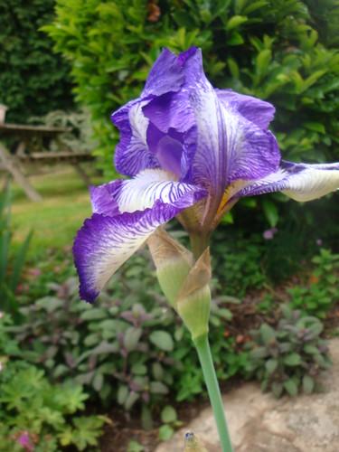Bubry image 200 for Aubade jardin d iris