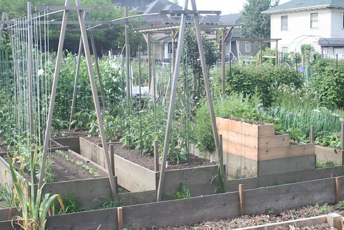 Use trellis, string, fencing, or other materials as a support to get your garden to grow upwards!