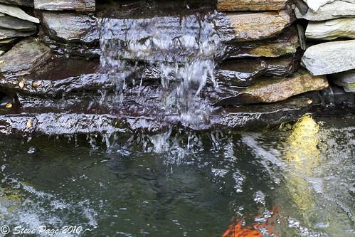 eos waterfalls koi brook stevepage koipond itail stephenpage canon5dmarkii canonef100mmf28lisusmmacro pagephotos