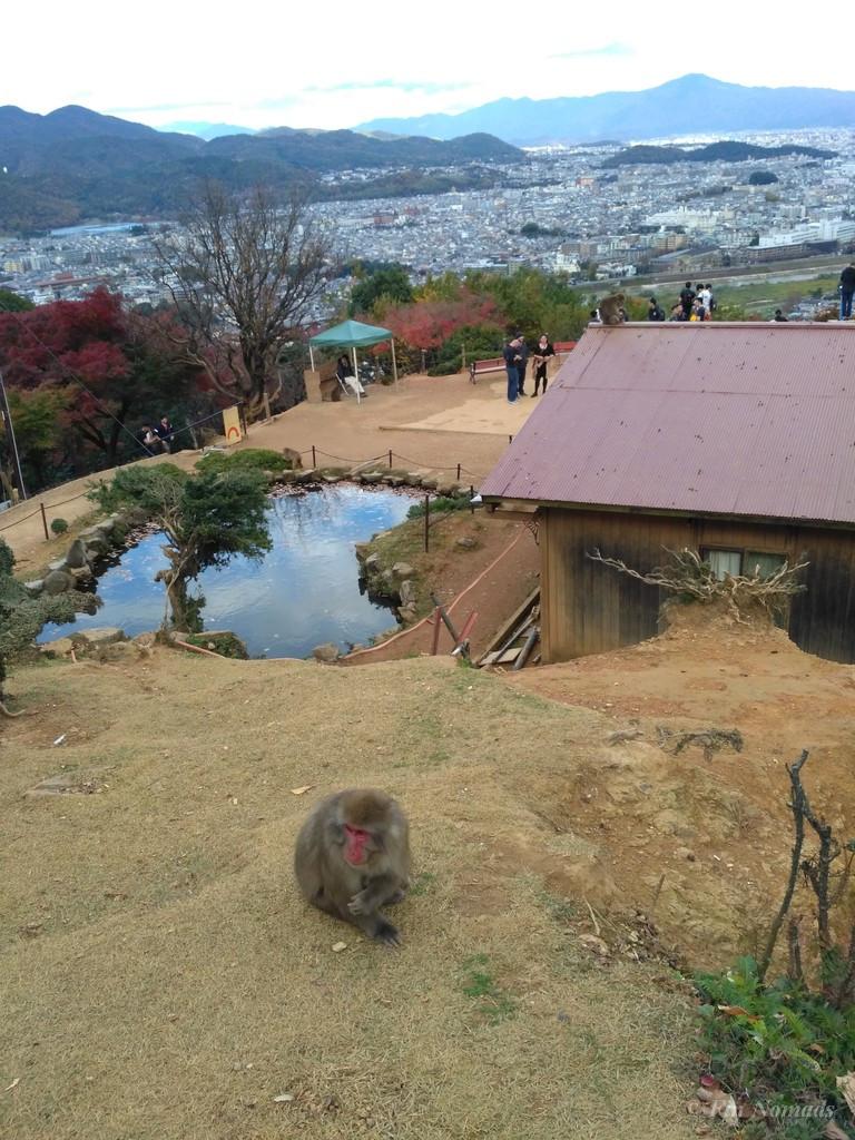 Arashiyama kyoto monkey 6