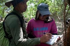 Mangrove at Pulau Dua Natural Reserve