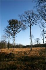 Brickett Wood common